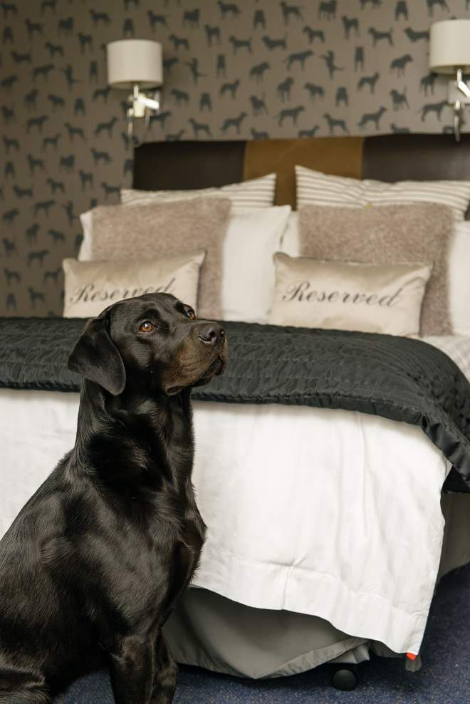10 Of The Best Dog Friendly Hotels In The Uk Travelzoo