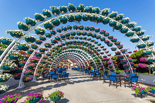 the dubai miracle garden which opened in 2013 is spread out across 775000 square feet to date its the worlds largest natural flower garden - Dubai Miracle Garden