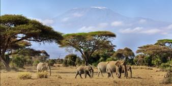 Kenya Small-Group Safari w/Flights, Save $1100