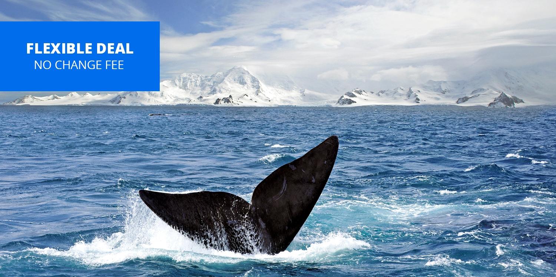 $4129 -- 22-Night Antarctica & South America Grand Voyage