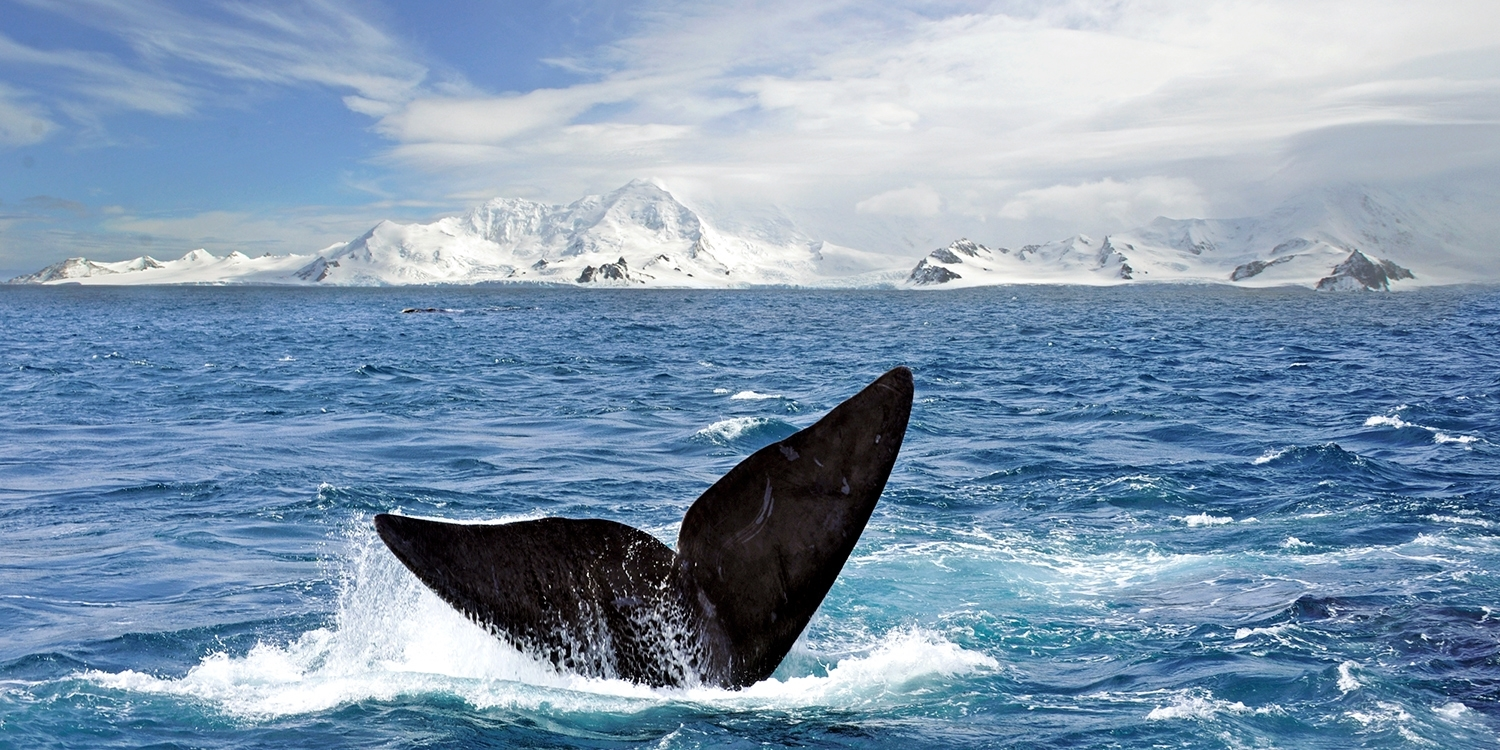 $1699 & up -- 22-Night South America & Antarctica Holiday Cruise