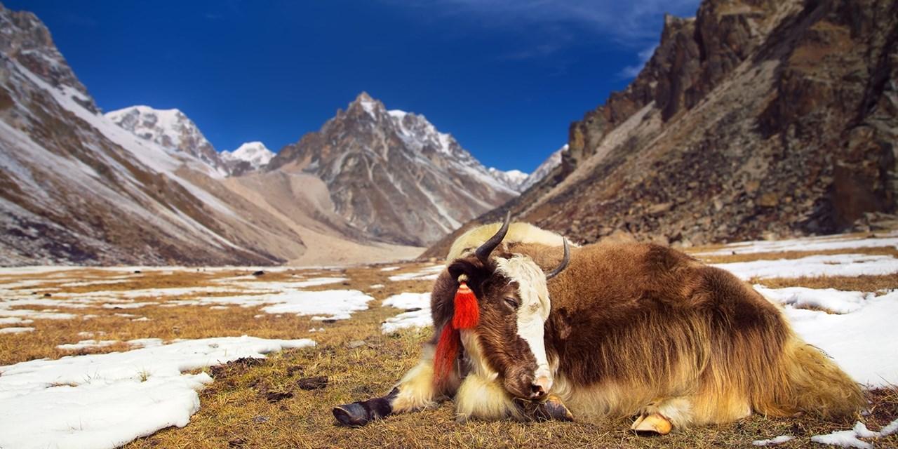 $1399 -- Bhutan: 5-Night Thousand Lakes Trek w/Everest Views