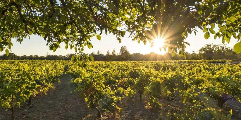7 Reasons Why Santa Rosa Is Wine Countrys Best Kept Secret Travelzoo