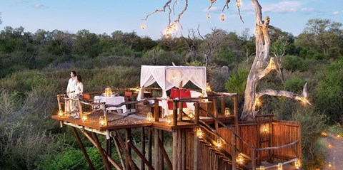 $4999 -- Luxurious South Africa Safari: Air from 38 Cities