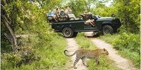 $4999 -- Luxury South African Safari w/Air from D.C.