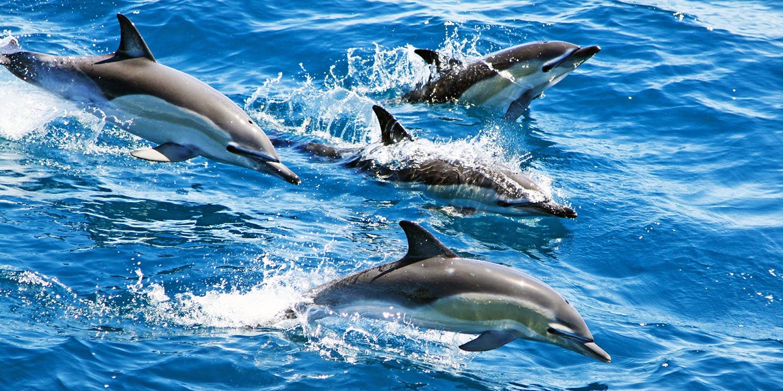 Cornwall coast: 2-hour dolphin-spotting safari