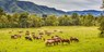 'Breathtaking' Smoky Mountain Ranch for 2, Save 50%