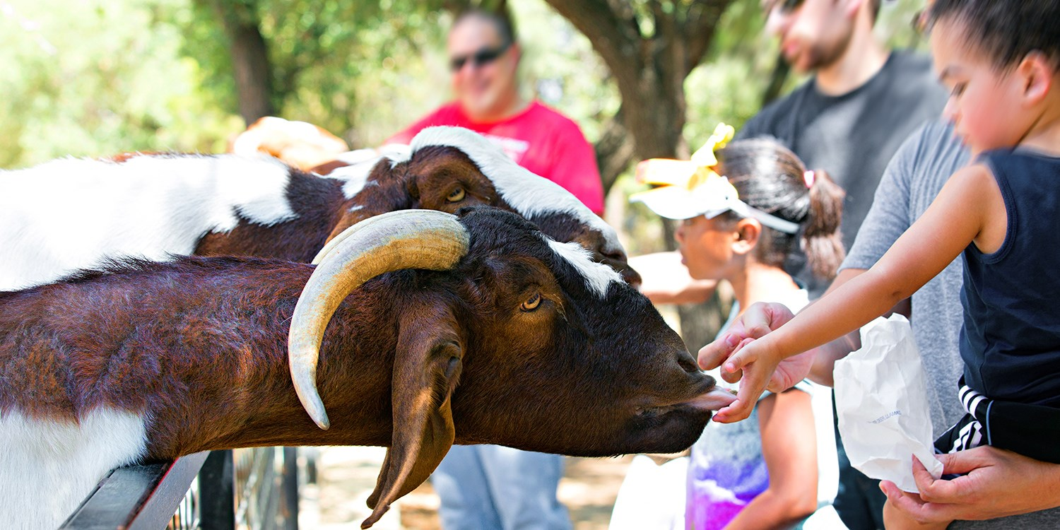 $19 -- Austin Zoo: Family Pack Admission, Save 50%