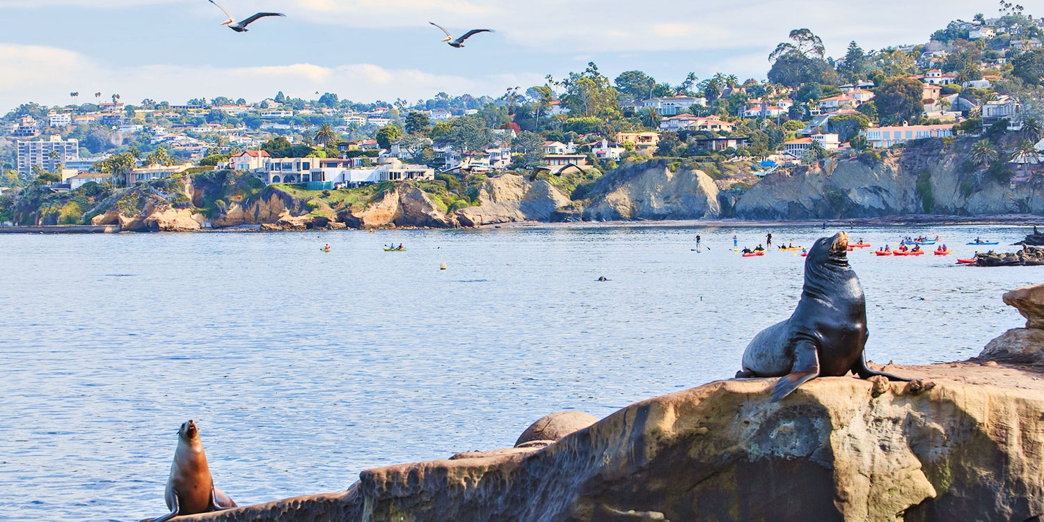 $20 & up -- La Jolla Sea Caves: Guided Snorkel or Kayak Tour
