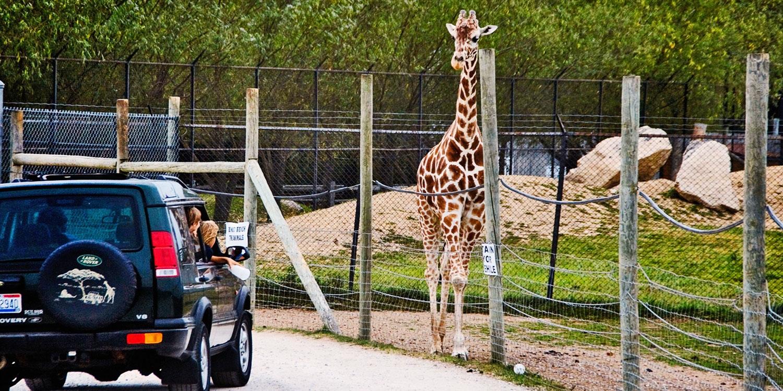 'America's Best' Safari Adventure Admission: Save nearly 65%