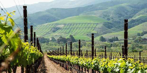 Save 50% on a wine passport for two people in the greater Santa Barbara area, good for two-for-one wine tastings and discounted wine purchases.