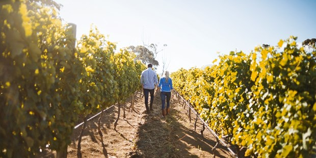 Yakima Valley's wine grapes are among the best in the world (Fodor's) and Walla Walla Valley is world class (Vouge). Explore these destinations and more throughout Washington state with a wine passport for over 50% off.