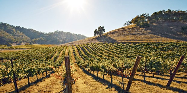 California's premier wine region, Sonoma Valley is where the pleasures of eating and drinking are celebrated daily (Fodor's). Save more than 50% on a wine passport featuring deals at over 60 wineries across the area.