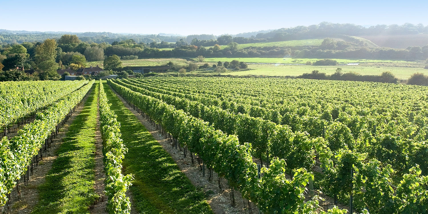 Hampshire vineyard tour for 2 with tastings & lunch
