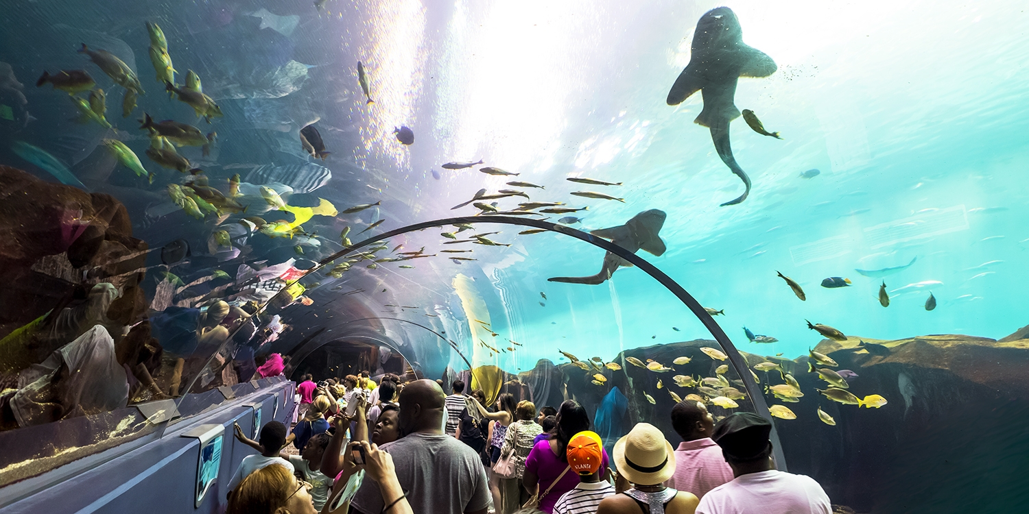 The Best Aquariums in the US | Travelzoo