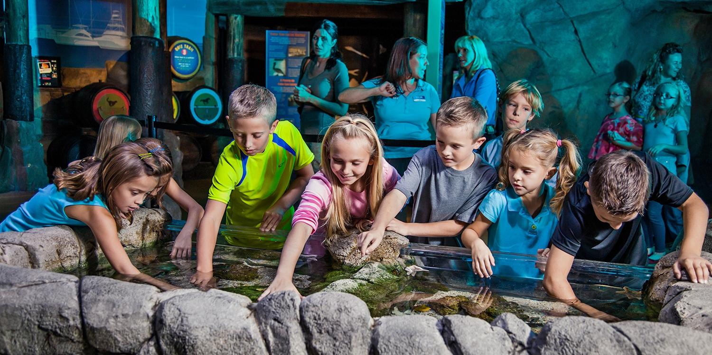 $12-$13 -- SEA LIFE Aquarium in Tempe, Save up to 30%