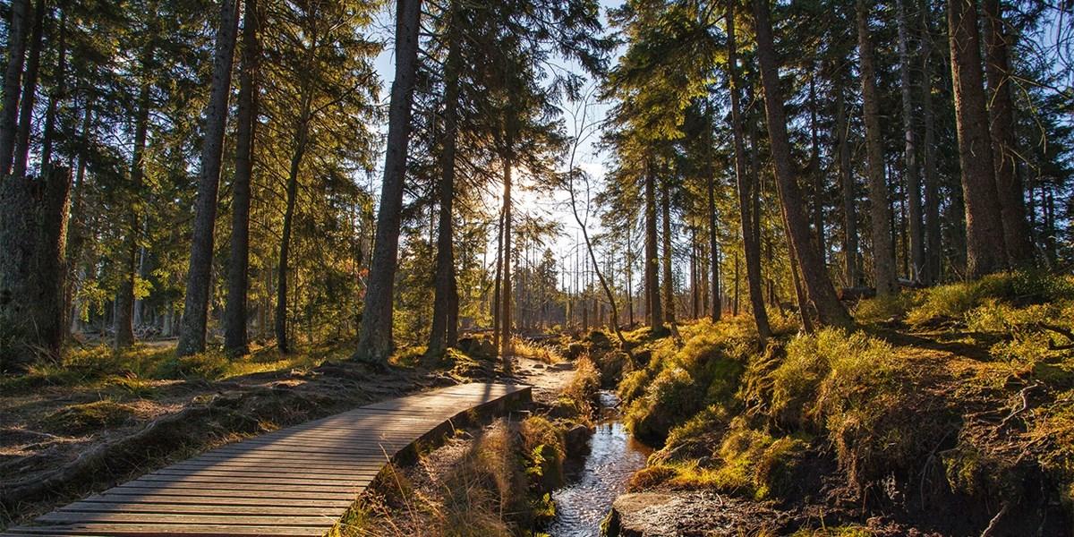 Märchenhafter Harz: 3 Tage inkl. Brotzeit, -46%
