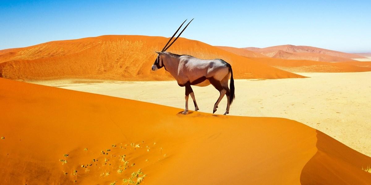 12 Tage Namibia mit Flug und Safari, -500 €