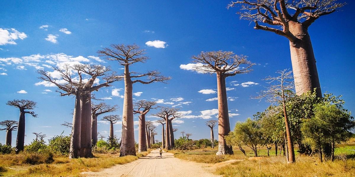 Exotisches Madagaskar: 12 Tage Rundreise & Flug