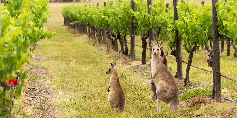 $135 – 2-Nt Hunter Valley Winter Stayw/Wine & Cheese, -38% -- Pokolbin, Australia