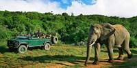 $3999 -- South Africa Upscale Safari from Washington, DC