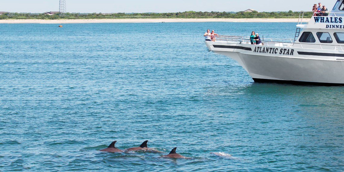 Cape May: Member-Fave Whale- & Dolphin-Watching Trips
