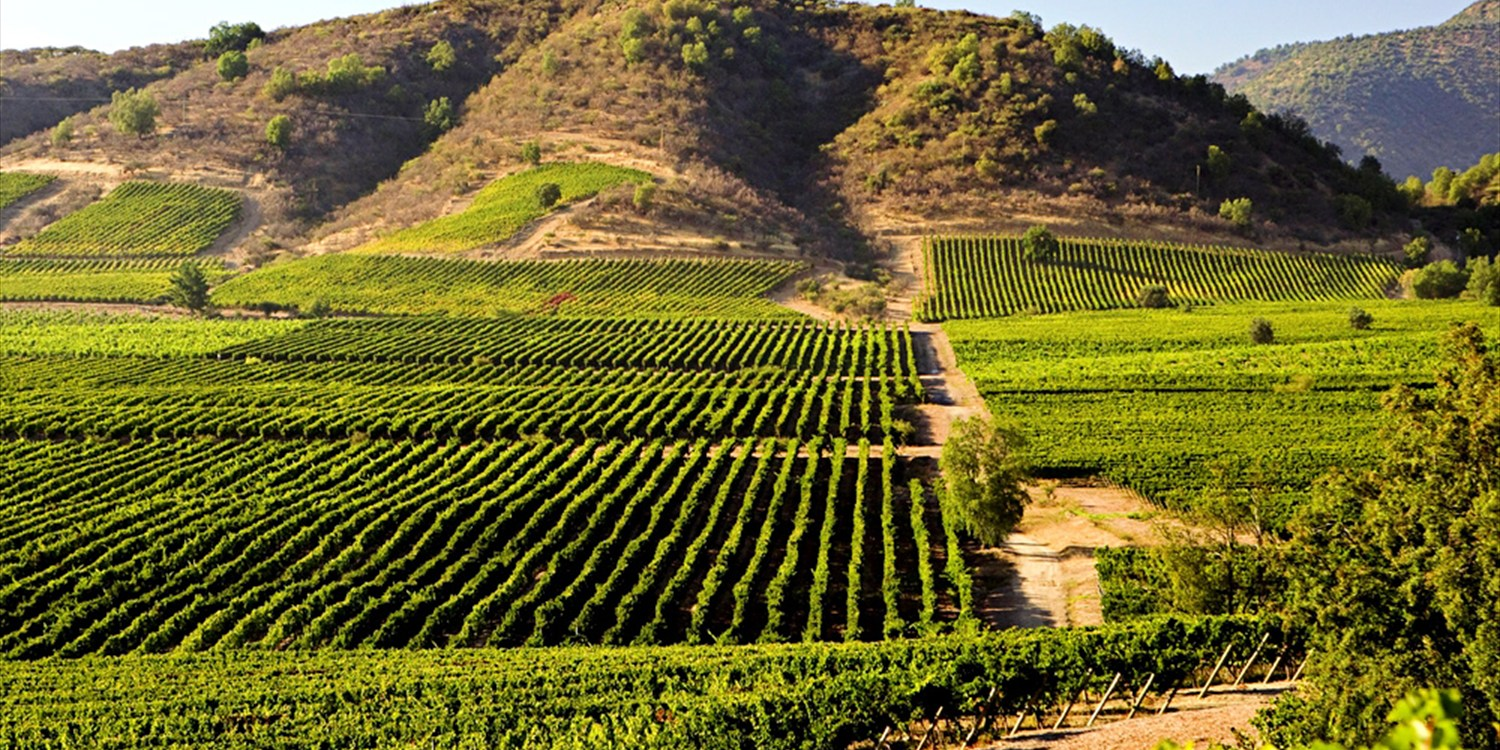 $79 -- Temecula: Wine Tour w/Tastings & Lunch, Reg. $140