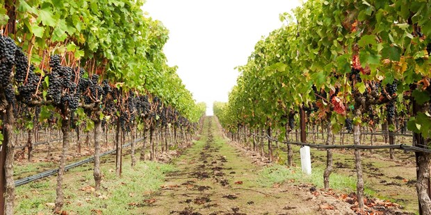 Save 50% on a wine passport for two in Napa, good for complimentary wine tastings and discounted wine purchases.