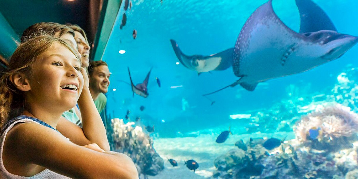 85% off – Gold Coast Sea World Stay for 4 w/Parks & More, Pay £111 -- Gold Coast, Australia