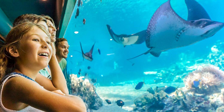 $176 – Australia: Sea World Stay incl.Theme Park Entry -- Gold Coast, Australia